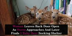 Woman Leaves Back Door Open As Storm Approaches And Later Finds 3 Baby Deer Seeking Shelter