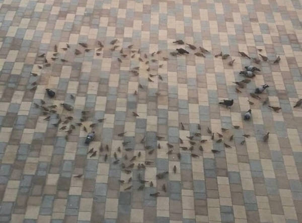 1. This husband spreads bird food in a heart pattern to let his wife see a heart every time she wakes up in the morning.