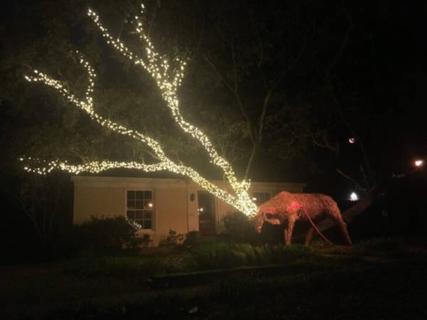 """15. """"Someone In My Neighborhood Is Making Good Use Of Their Low Hanging Oak Tree Branches This Christmas."""""""