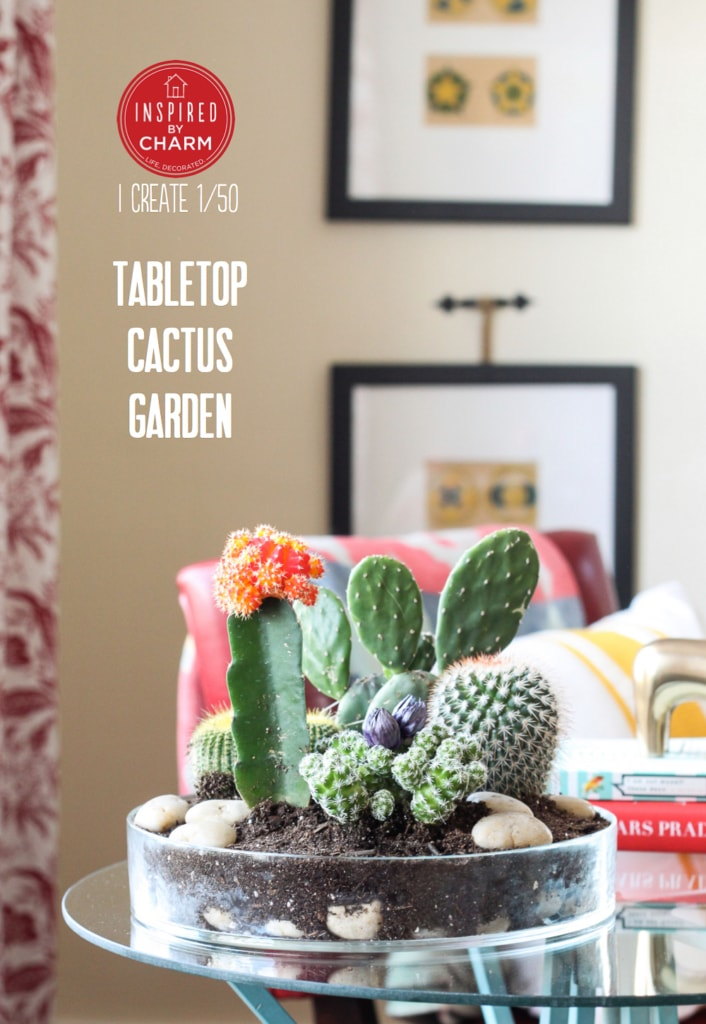Tabletop Cactus Garden | Inspired by Charm