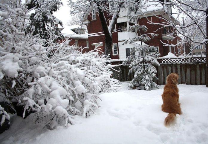 matcha snow dog
