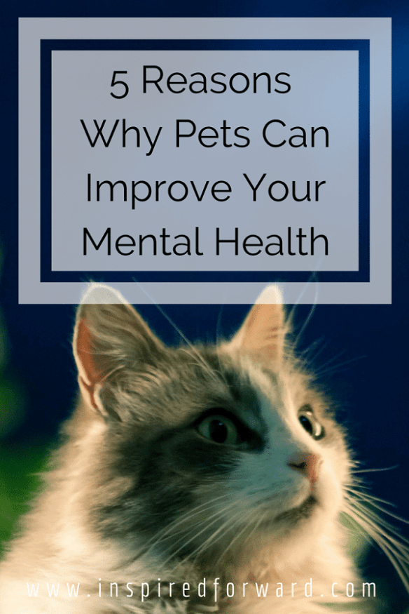 5 Reasons Why Your Mental Health is Better With a Pet