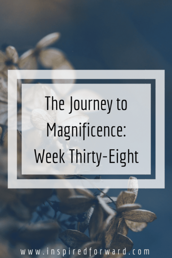 week thirty-eight pinterest