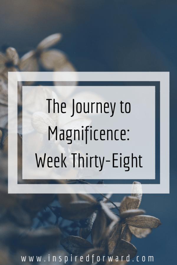 week thirty-eight pinterest