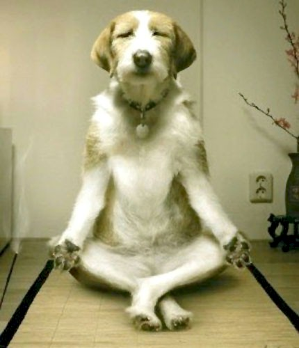 https://i2.wp.com/www.inspiredliving.com/stress/DogMeditation.jpg