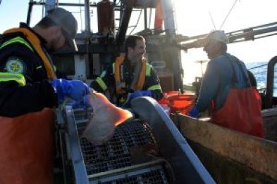 Marine scientists Brian Jenkins (left) and Matthew Griffin (center) with the firm INSPIRE Environmental work with local fishermen, such as Anthony Ponte (right), to collect data on fish around the Block Island Wind Farm.