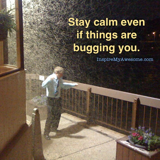 Stay Calm Even if Things Are Bugging You