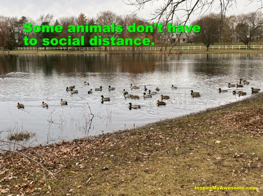 Some Animals Don't Have to Social Distance