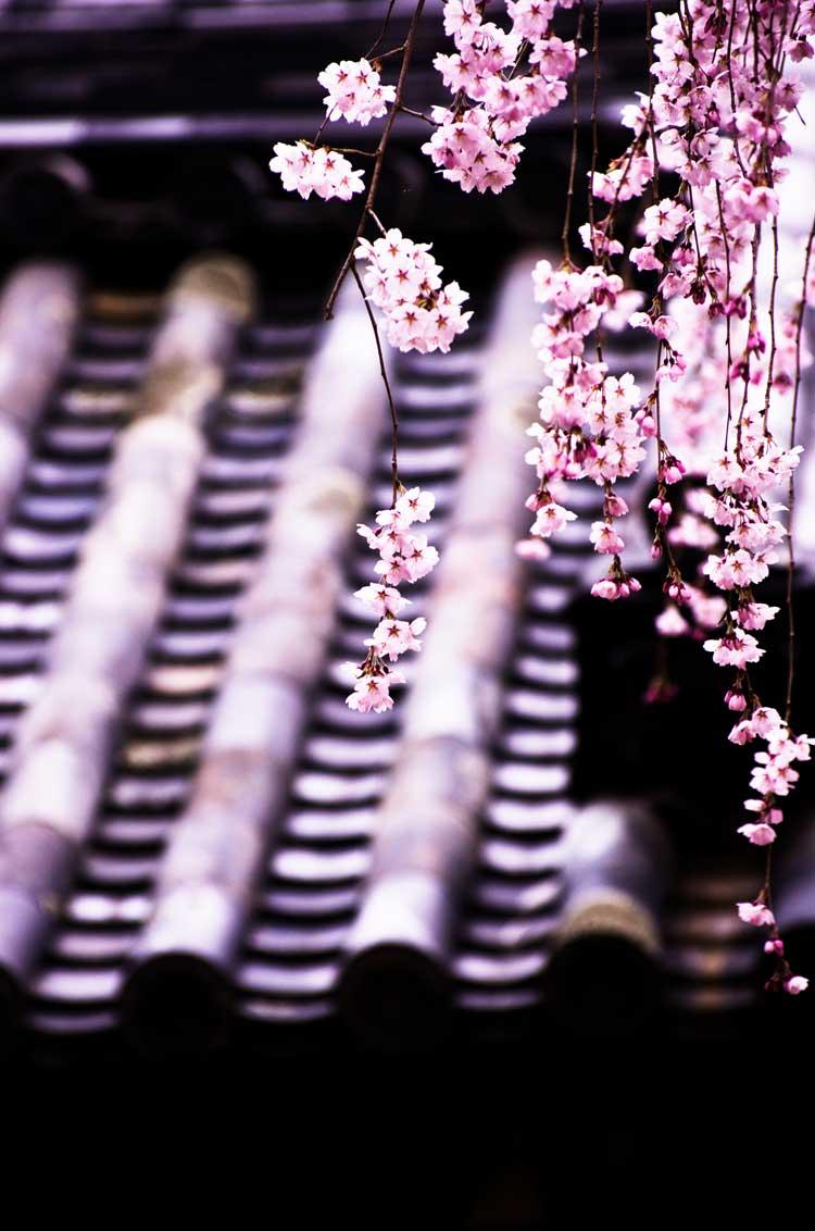 La primavera in Giappone