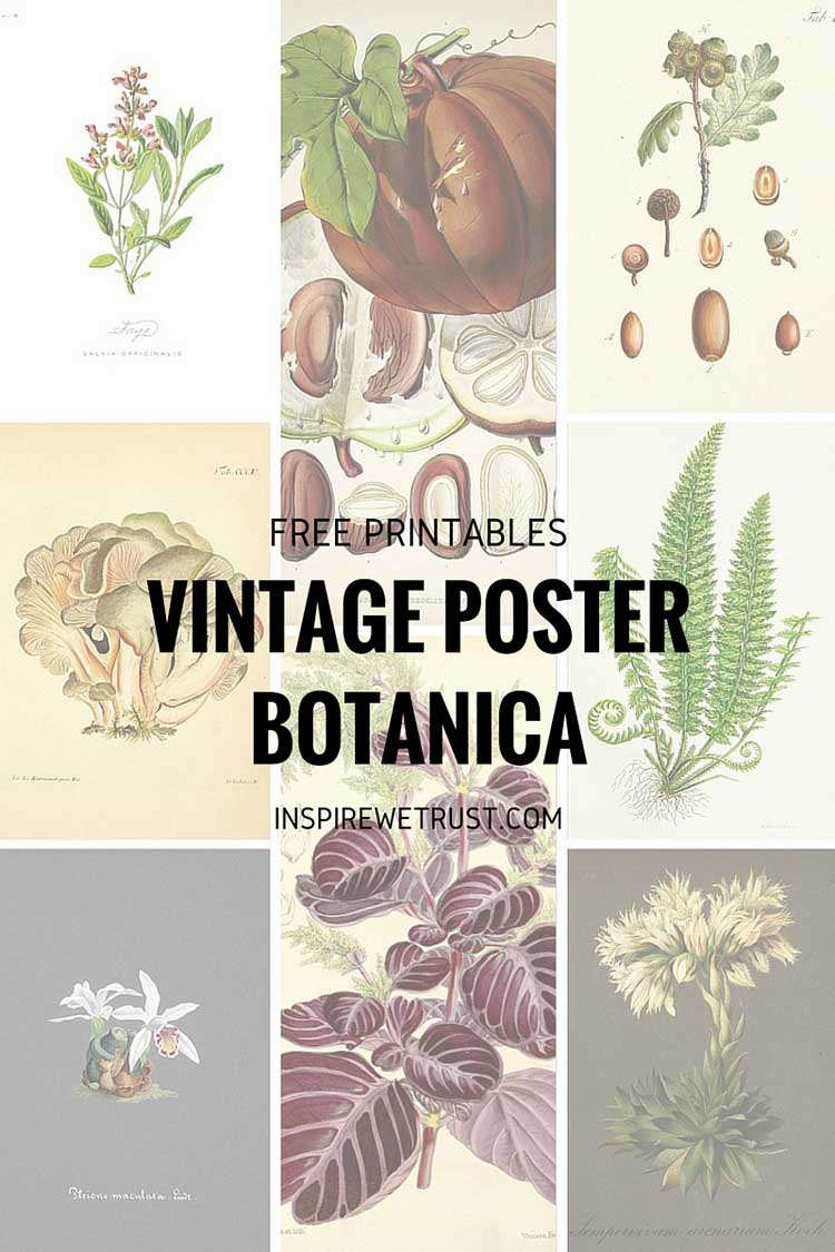 Vintage posters: free art for your home