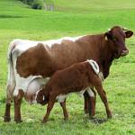 Die Wahrheit über Milch – Mythos 2: Ohne Milch zu wenig Kalzium