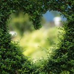 Selbstheilung ist möglich: Auch das Herz kann heil werden