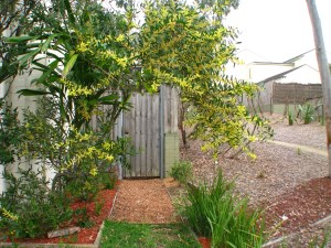 Our wattle arch