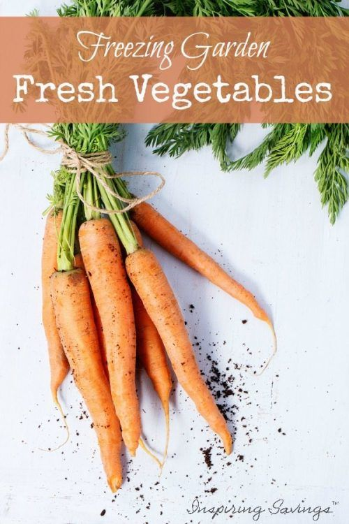 Freezing vegetables preserves the taste of your summer garden for enjoyment all winter long. Here are some directions to Freeze Fresh vegetables - Whether you have a large harvest from your garden or just found find a great deal on produce from your local grocer.  Get tips for preparing, freezing and storing fruits, vegetables, and herbs. This is a healthy idea for saving money on produce. #vegetables #garden #freezerfoods