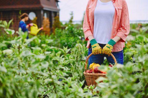 lady in garden holding basket of vegetables