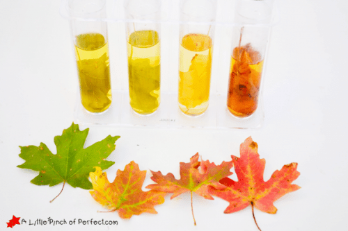 Exploring Colors and Chlorophyll With Kids