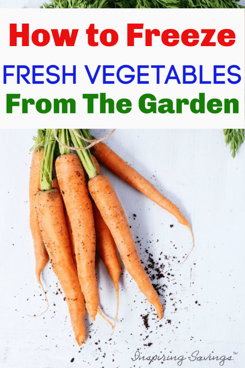 Fresh Carrots from the garden on white background - Freeze Fresh Vegetables