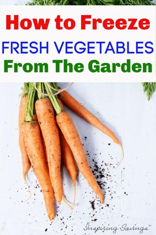 Fresh Carrots from the garden on white background - Freeze Fresh Vegetables