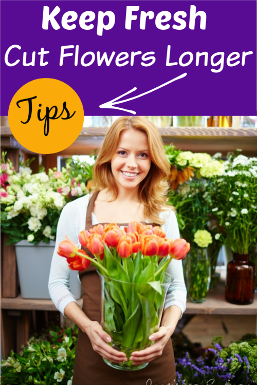 "Woman hold freshly cut tulips in clear vase with text overlay ""Keep Fresh Cut Flowers Longer"""