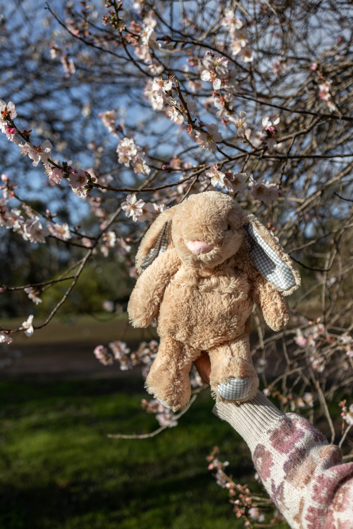 cherry blossoms and bunny toy