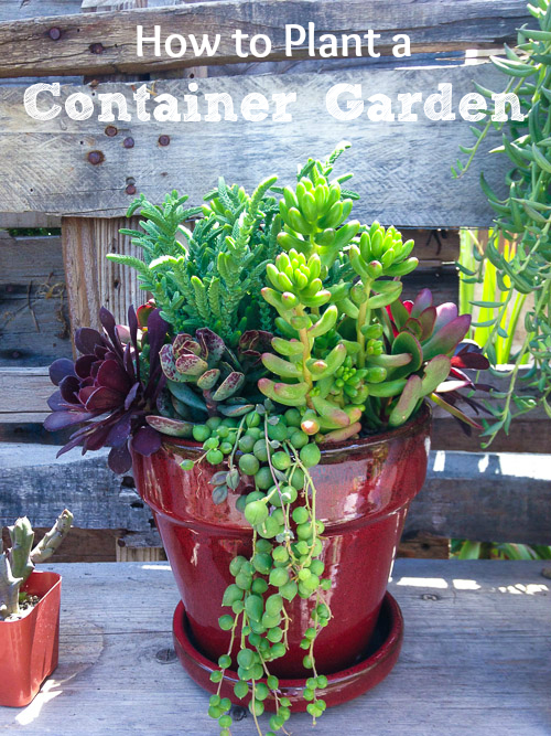 How Plant Vegetable Garden