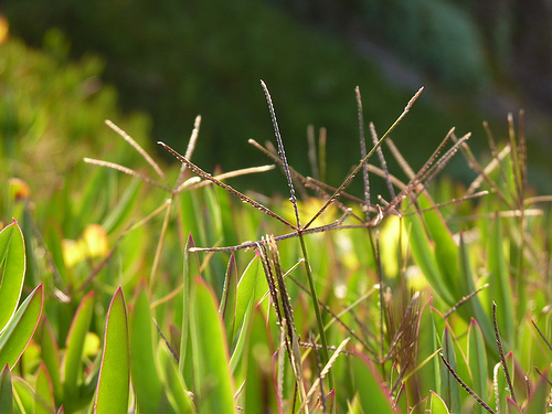 How to eliminate weeds in your yard