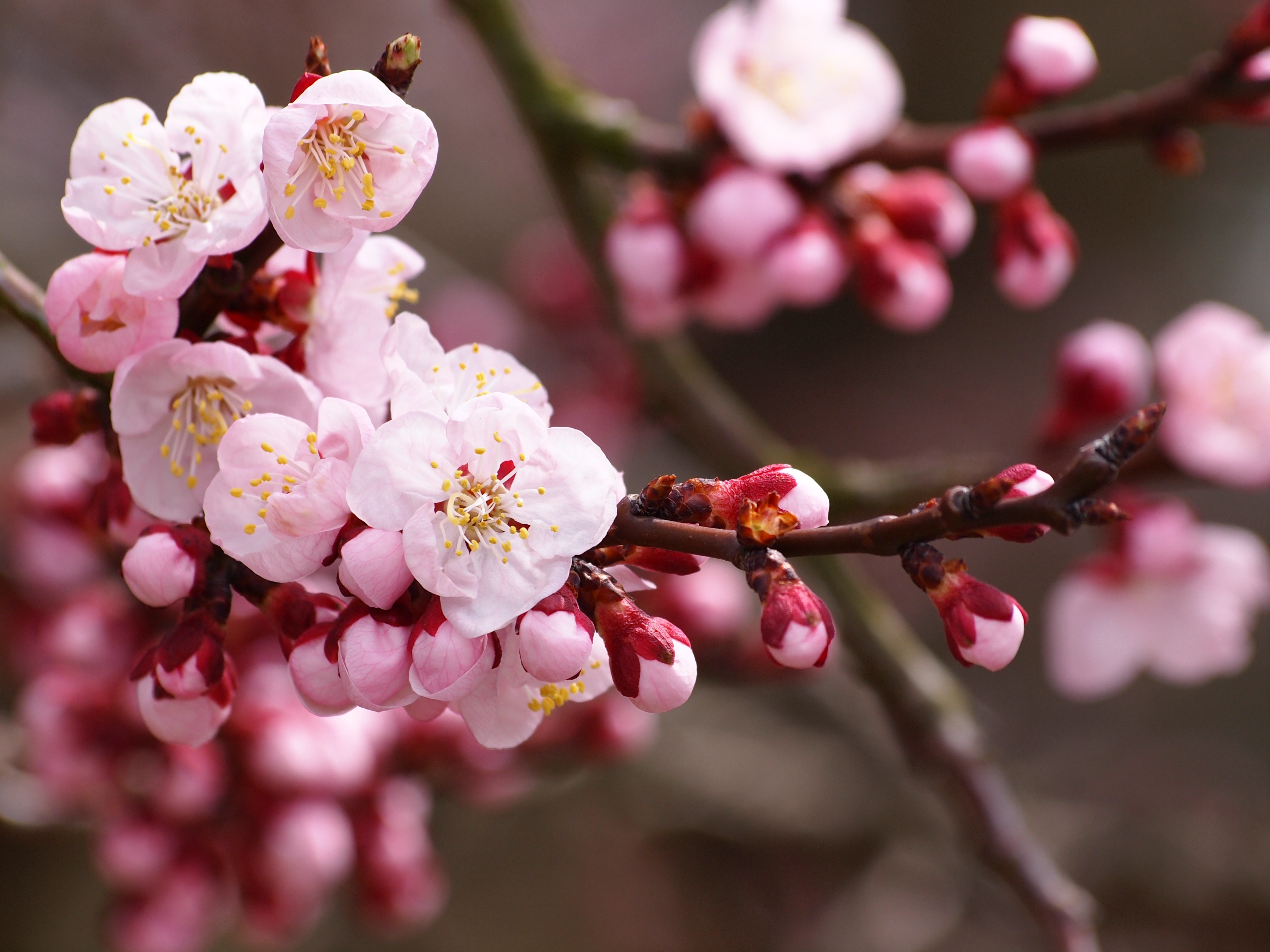 When Should You Plant Fruit Trees