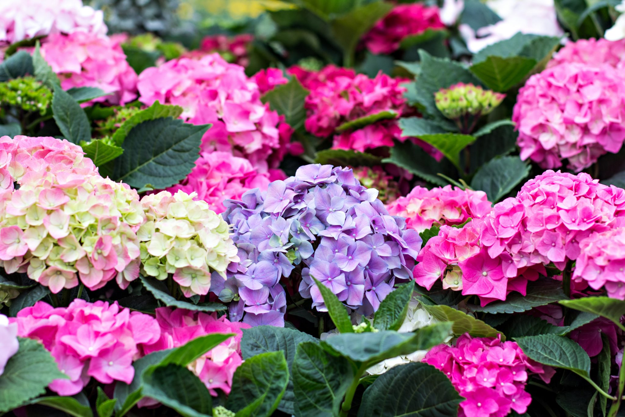 20 Of The Best Plants For Shade Install It Direct