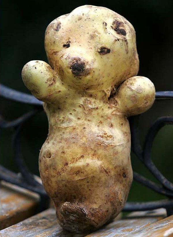 Bear shaped potato