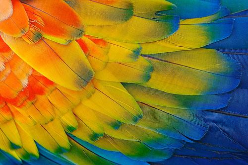 instantShift - 80 Stunning Examples Of Macro Photography