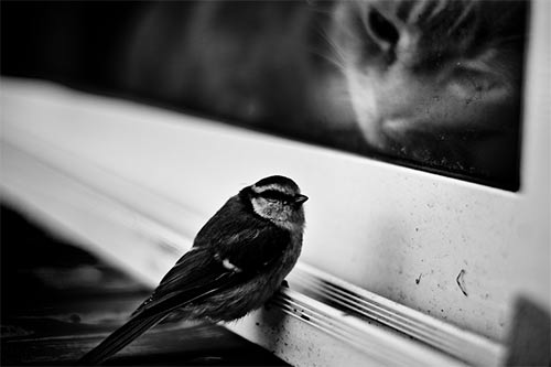 instantShift - Black and White Photography