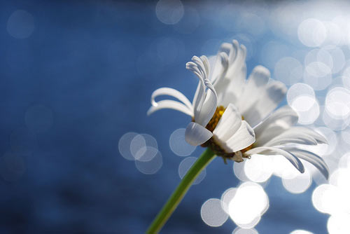 instantShift - Brilliant Bokeh Photography