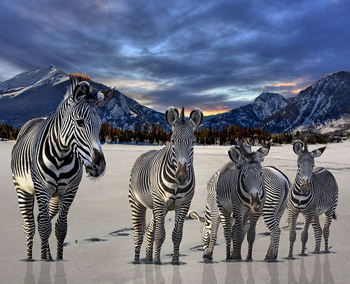 instantShift - Brilliant Photographs to Refresh Your Mind
