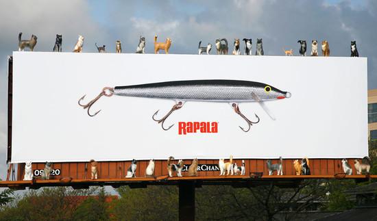 Rapala Fishing Equipment: Cats