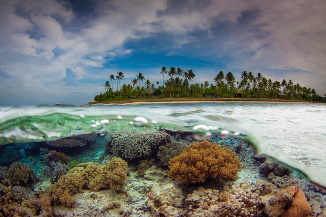 Flores Sea, Indonesia