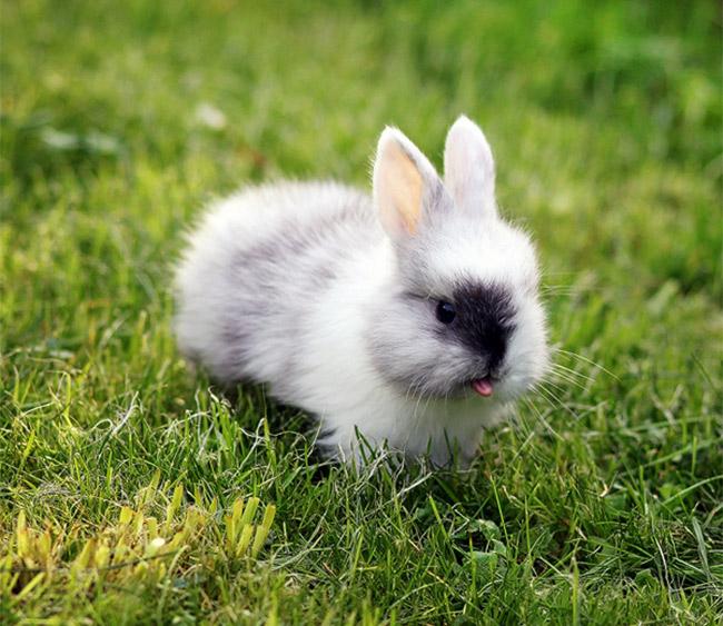 Cute Rabbits Tongues