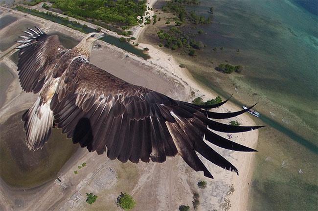 Flying with an eagle over Bali Barat National Park, Bali, Indonesia