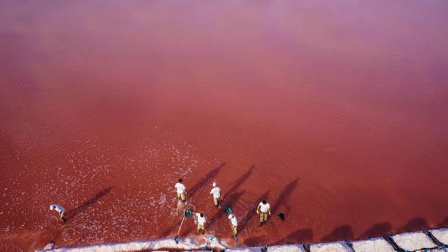 Sea salt harvesting in Aigues-Mortes, France.