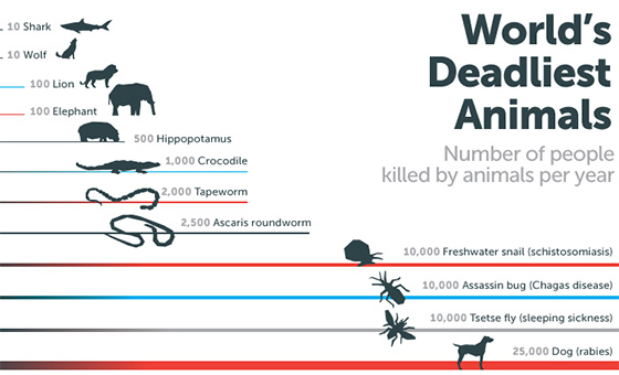 The Deadliest Animal in the World