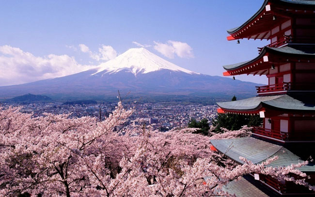 Cherry blossoms and Mt Fuji in Japan