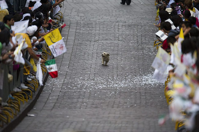21st century photos - A dog soaks in an adoring crowd in Mexico by following the Pope [2011]