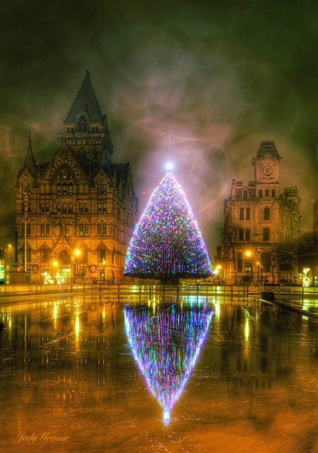 Purple-themed tree in Downtown Syracuse, New York