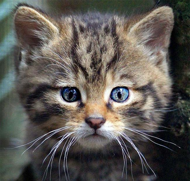This Kitty Has A Small Cat Face On Its Forehead
