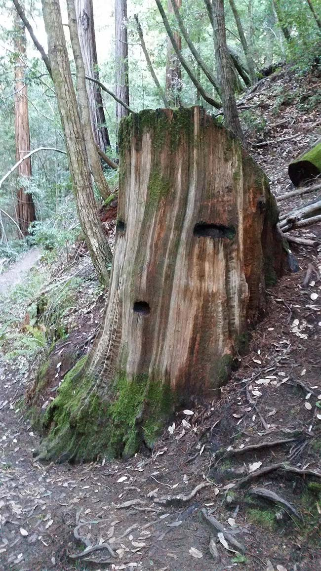 The Great Deku Tree?