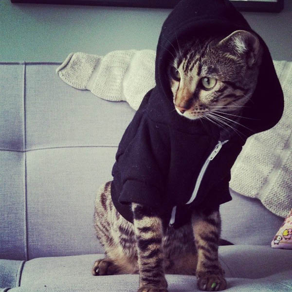 I've never seen such a hip cat before.
