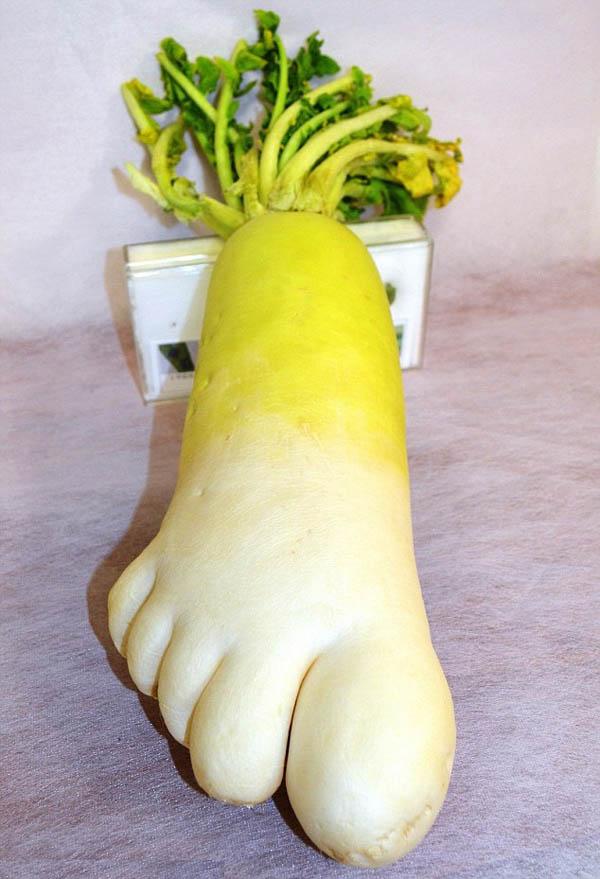 Foot Shaped Radish