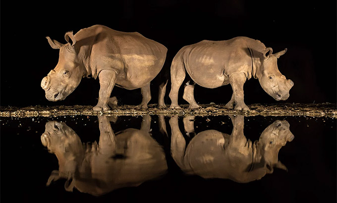 3rd Place (Wildlife). 2018 National Geographic Photo Contest