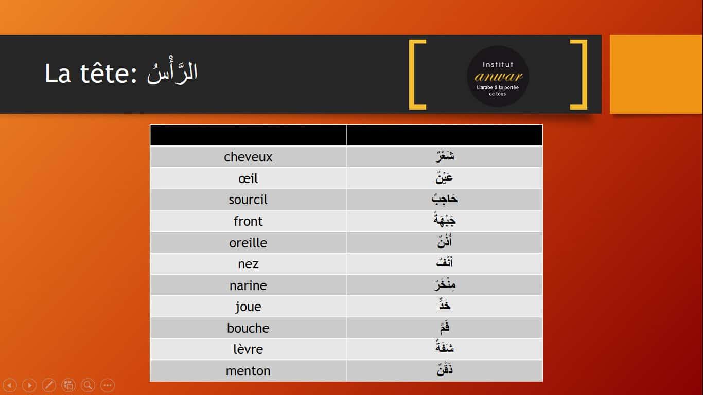 vocabulaiire de parties de la tête en arabe