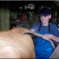 International Veterinary Program