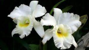 orquideas Geocrom 8